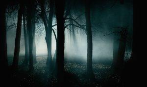 Dark Forest - Folklore
